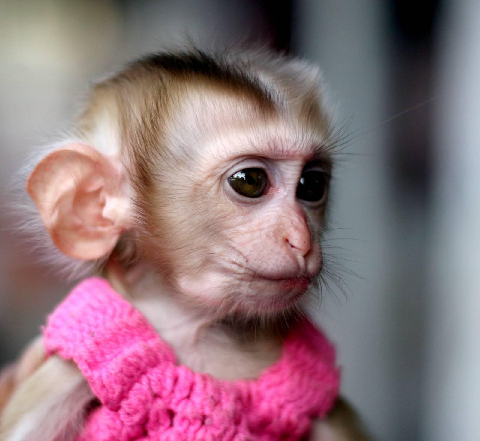 Название Умные обезьяны Оригинальное название Clever Monkeys Год